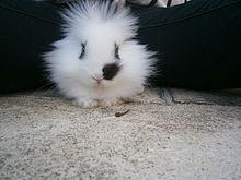clapier pour lapin