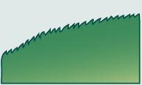 Leaf morphology serrulate