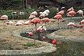 Leipzig - Zoo - Afrika - Flamingo 05 ies.jpg