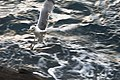 Liguria - Manarola Aprile Kframe 2015 (78).jpg