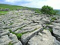 Limestone pavement on Malham Cove - geograph.org.uk - 188101.jpg
