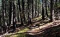 Lincoln NF Trail 1.jpg