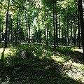 Lippspringer Wald 17869-20170527 1018111052055576.jpg