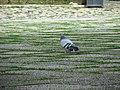 Lisboa bird - panoramio.jpg