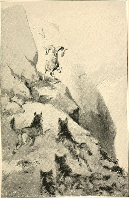 Lives of the hunted, containing a true account of the doings of five quadrupeds and three birds, and in elucidation of the same, over 200 drawings (1901) (14564540389)