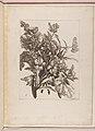 Livre de Toutes Sortes De Fleurs D'apres Nature MET DP210744.jpg