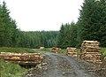 Loads Of Logs - geograph.org.uk - 476142.jpg