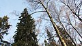 Lobnya, Moscow Oblast, Russia - panoramio (522).jpg