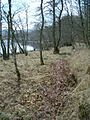 Lochside trees - geograph.org.uk - 102439.jpg
