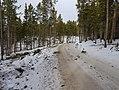 Logging - Cutler Nordic Trails.jpg