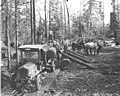Logging crew, horse team, and Master truck and trailer with logs, Coal Creek Lumber Co, ca 1921 (KINSEY 45).jpeg