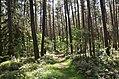 Lorenzer Reichswald bei Winkelhaid 20170819 EDA 1112.jpg