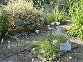Lorto-botanico-di-padova-2016 27757185784 o 38.jpg