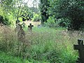 Lost in the grass - geograph.org.uk - 1383270.jpg