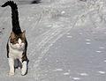 Love Cats (2302117417).jpg