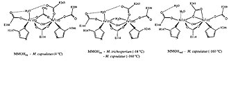 Methane monooxygenase - The resting, oxidized, and reduced state of the diiron core.