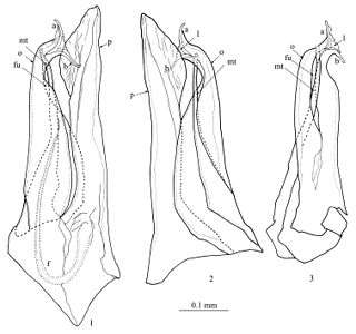 <i>Mammamia</i> genus of myriapods