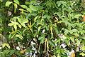 Mangrove 2489.jpg