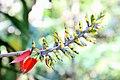 Manu flower.jpg