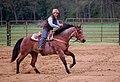 Mark E. Hufeisen Horse Complex (17135754189).jpg