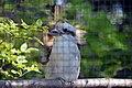 Martin-chasseur géant (Zoo-Amiens)b.JPG