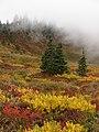 Meadow with fall colors and fog in Edith Basin. Mid September 2015. (384eea6141754e3eae0110d762c9cbfb).JPG