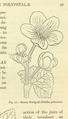 Medicinal Herbs Poisonous Plants-067a.png