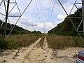 Microdesert - Rare Insect Community - panoramio.jpg