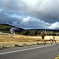 Midway Geyser Basin, Yellowstone National Park - panoramio.jpg