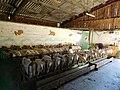 Milking of goats, Dordogne.jpg