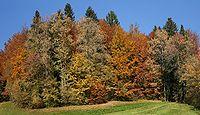 Mischwald Herbst.jpg