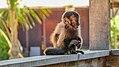 Monkey (33400975342).jpg
