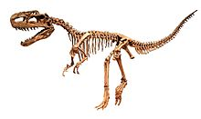 Monolophosaurus jiangi White Background.jpg