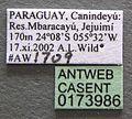 Monomorium pharaonis casent0173986 label 1.jpg