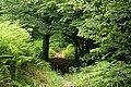 Montseny - panoramio.jpg