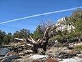 Monument Pass - Tahoe Rim Trail (2979565661).jpg