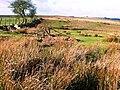 Moorland at last - geograph.org.uk - 670037.jpg