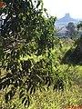 Morro do Cuscuzeiro - Cartão Postal de Analândia - panoramio.jpg
