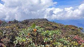 Mount Murud Summit 02