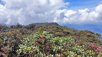 Mount Murud - Vegetation near the summit of Mount Murud
