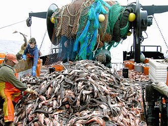 Fish in culture - Fish on a trawler's deck