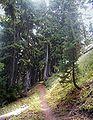 Mt Hood Wilderness East Side of Mountian.jpg