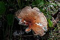 Mushroom in the Forest PLT-FG-3.jpg