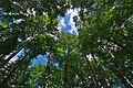 Národná prírodná rezervácia Stužica, Národný park Poloniny (11).jpg