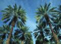 NRCSAZ02060 - Arizona (403)(NRCS Photo Gallery).jpg
