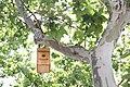 Nacen los primeros pollos en las cajas nido del paseo de la Castellana 06.jpg