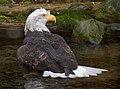 Nation's Bird Bath (4144727187).jpg