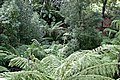 National botanical gardens03.jpg