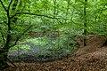 Naturbëschreservat «Beetebuerger Bësch»-111.jpg