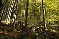 Nature reserve Ptaci stena in autumn 2011 (4).JPG
